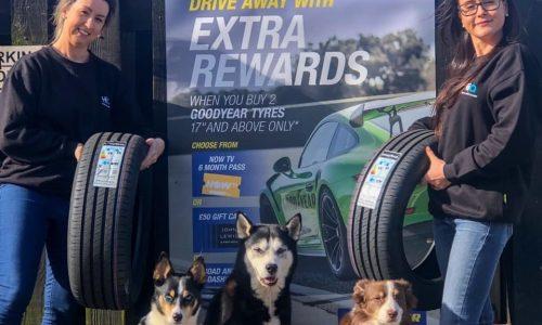HiQ Tyres & Autocare Preston staff and dogs