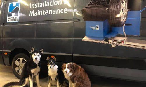 HiQ Tyres & Autocare Preston Van and dogs