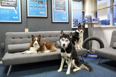 Hi Q Tyres Autocare Preston dogs