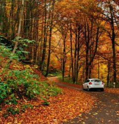 Sava autumn stock file